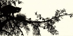 zouravliov-black_cat.jpg