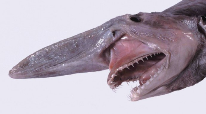 Гады морские: 10 реальных монстров с глубины