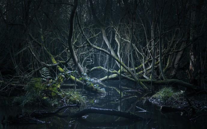 Эти леса не то, чем кажутся...
