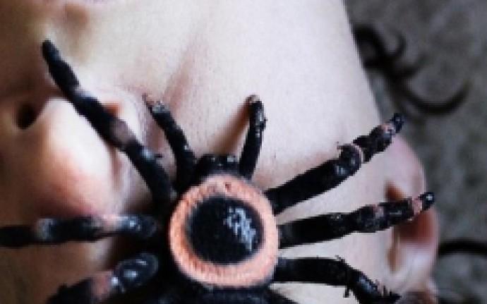 Восьмиглазый ужас: Пауки вымышленные и настоящие