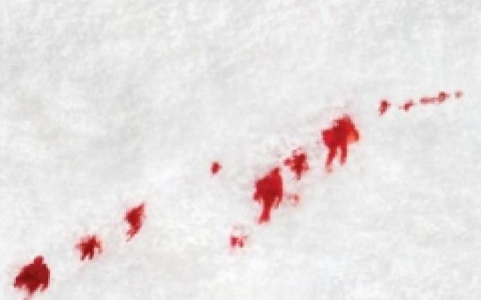 Артем Тихомиров «Белый лыжник»