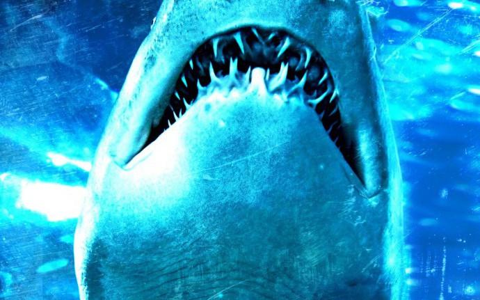 Бобровые акулы