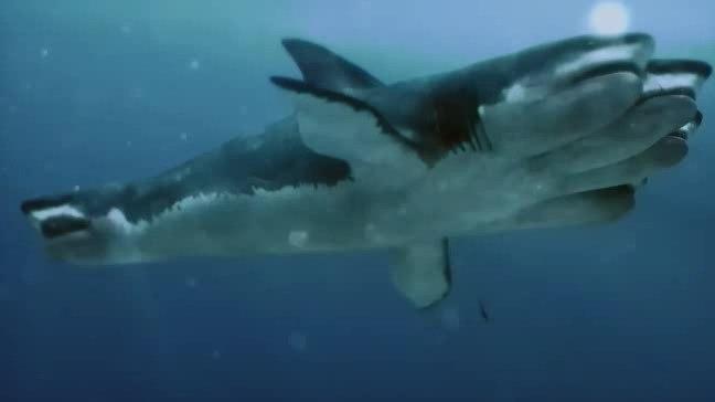 Нападение пятиглавой акулы