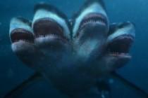Кровожадные рыбки